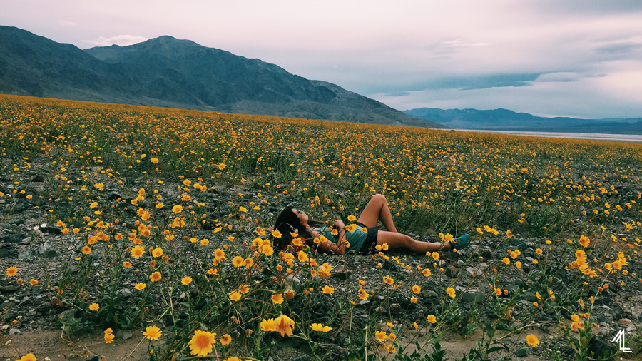 Super bloom at death valley national park melly lee photography blog mightylinksfo